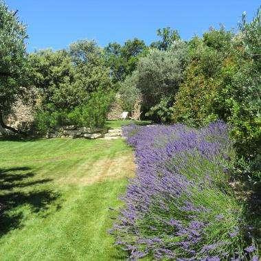 Le Jas de Gordes - jardin et lavande